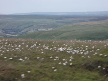 More moors, white fuzzy blobs in the fore ground are cotton grass.