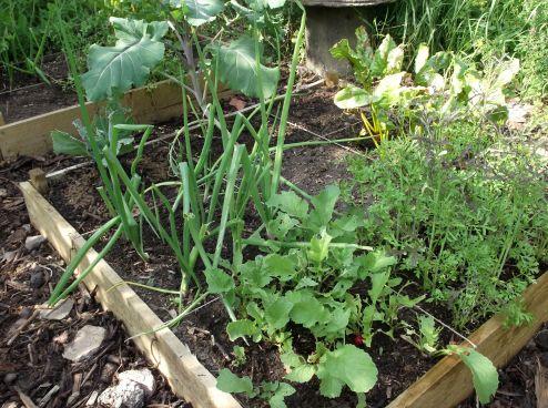 Garden success.