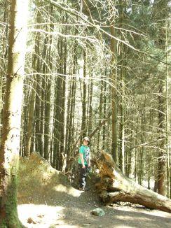 Whinlatter Forest.