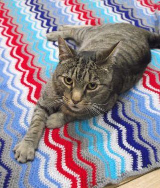 Big J's Blanket